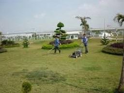 dịch vụ cắt cỏ Hưng Yên