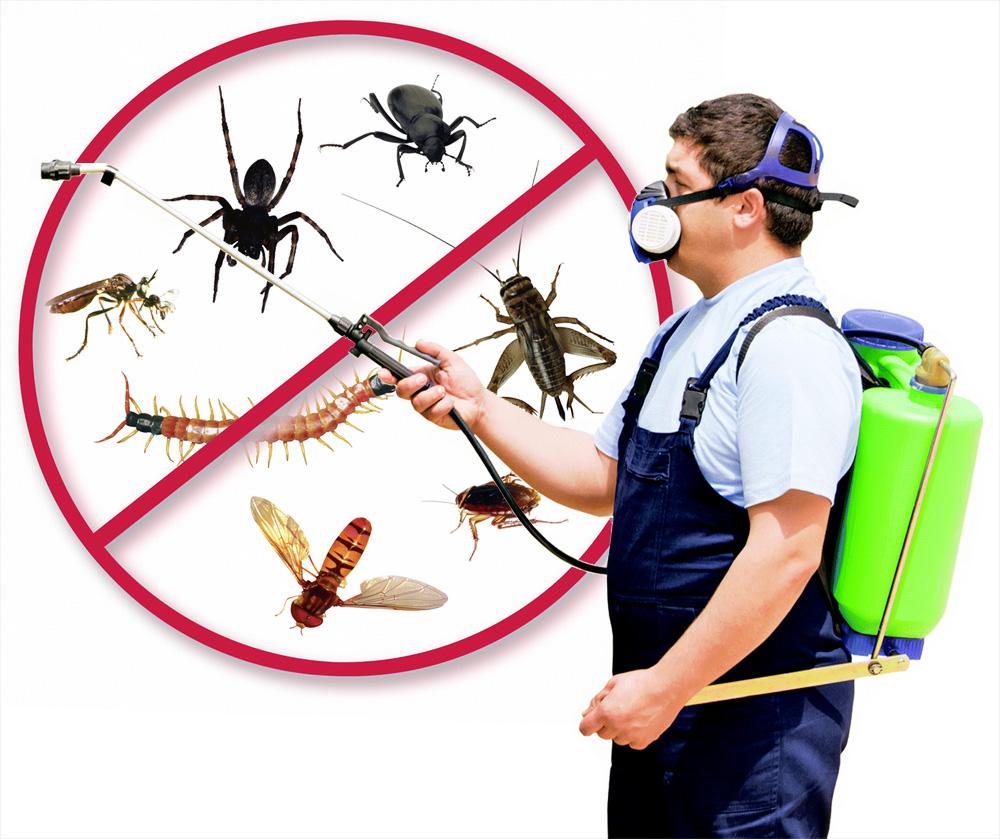 Phun thuốc diệt mối muỗi côn trùng hưng yên